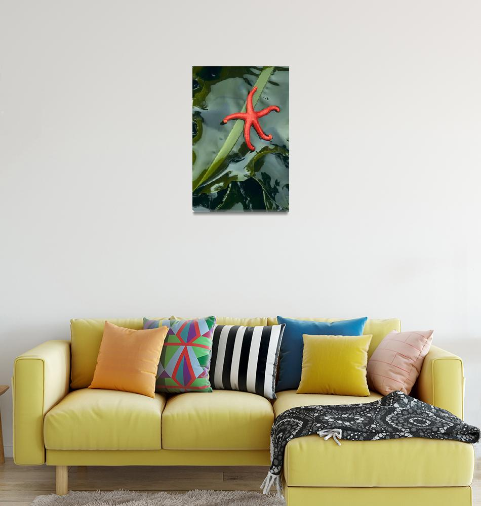 """""""Little Red Starfish""""  (2002) by Inge-Johnsson"""