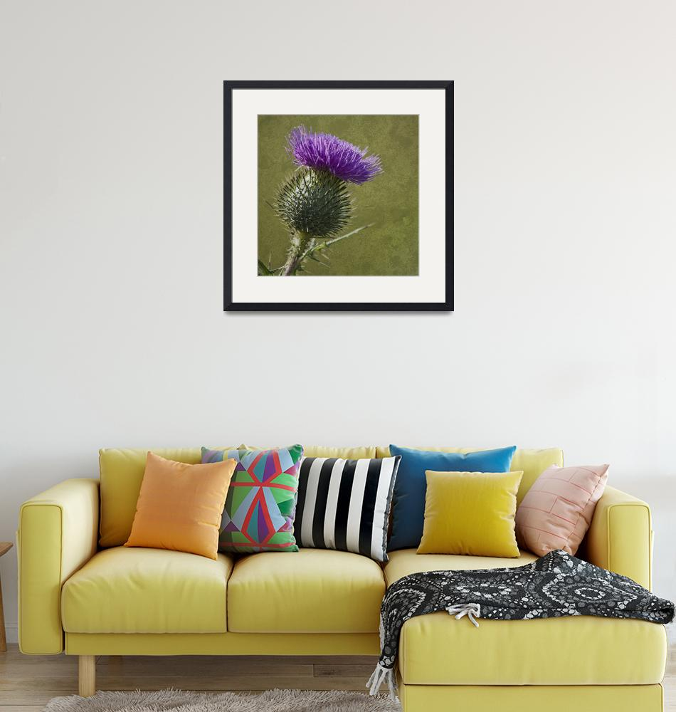 """""""Spear Thistle with texture""""  by StevePurnell"""