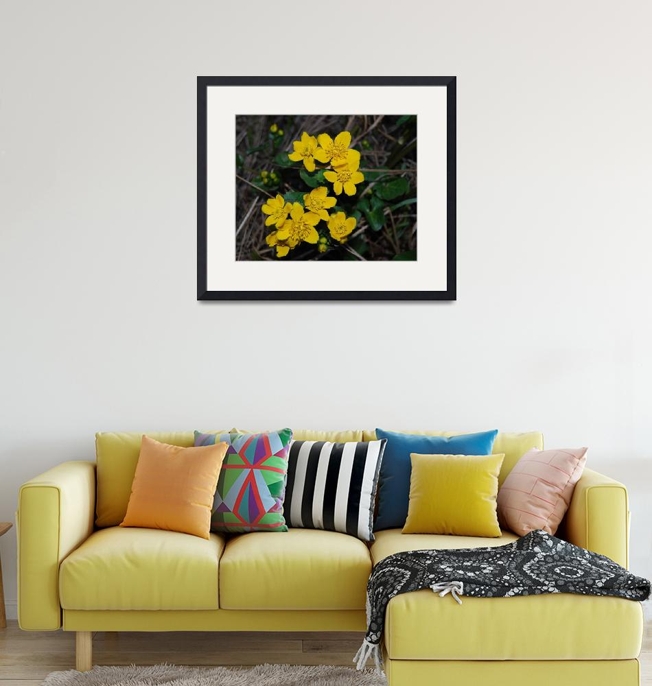 """""""Yellow flower""""  (2007) by skabma"""