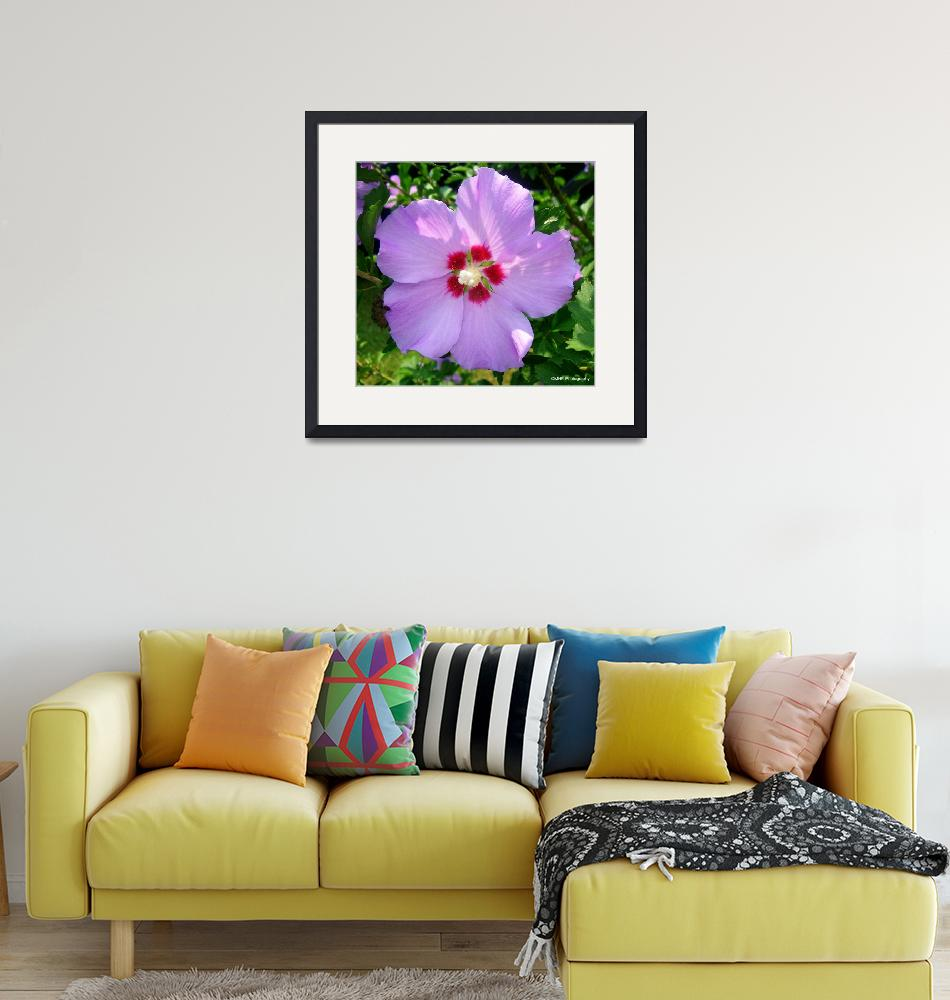 """""""Rose Of Sharon""""  (2010) by MHP-Photography"""