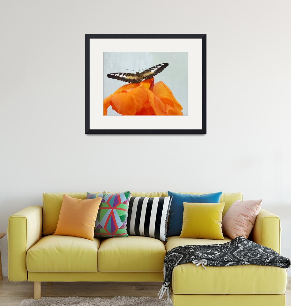 """""""Brown & White Butterfly on Orange Flower""""  (2009) by nemosphotography"""