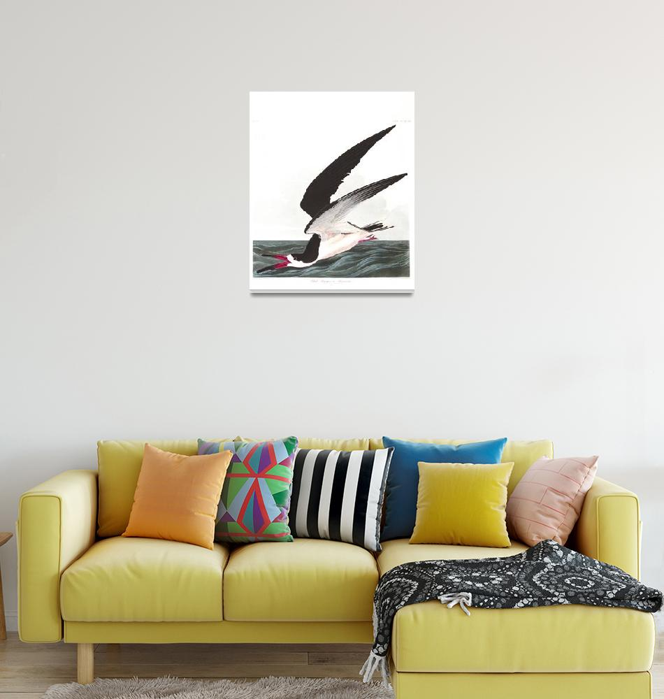 """""""Black Skimmer or Shearwater, Plate 323""""  by FineArtClassics"""