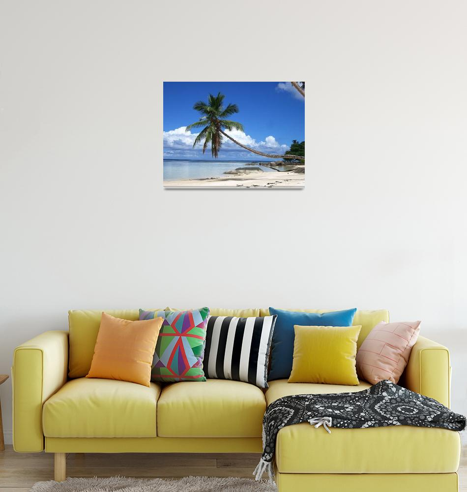 """Seychelles Palm Tree""  (2007) by h94jesse"