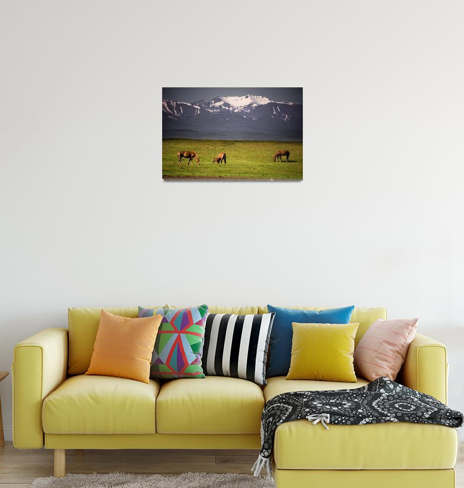 """Wild Horses In Tian Shan""  by robertgrac"