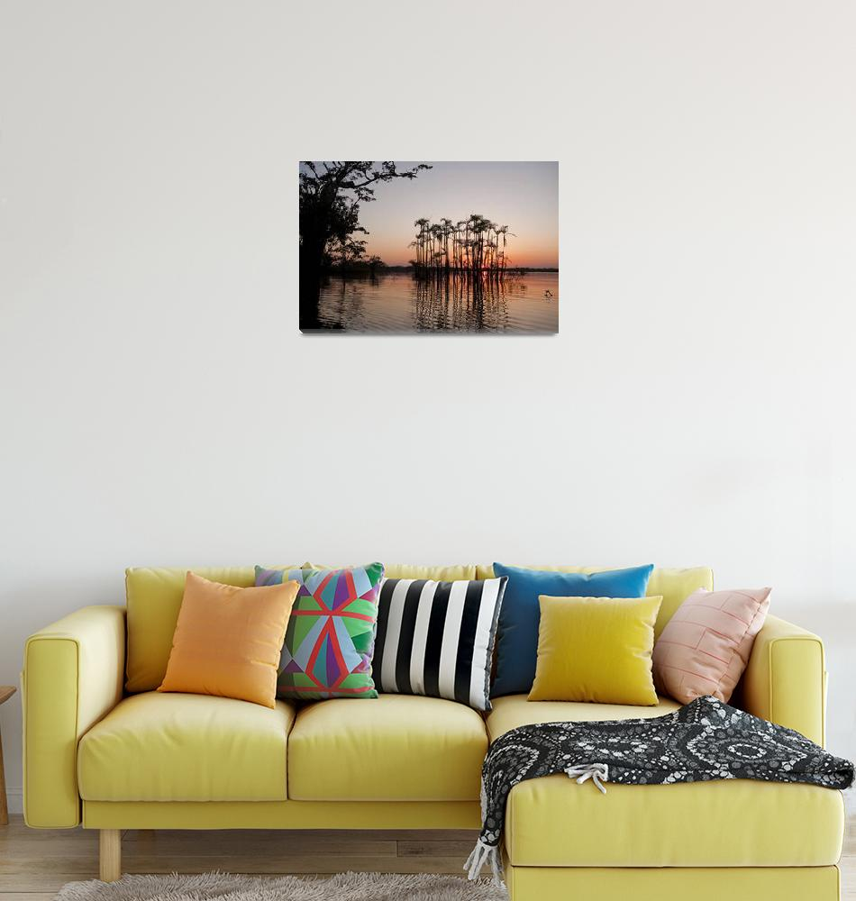 """""""Drowned Palms at Sunset, Amazon""""  (2010) by SederquistPhotography"""