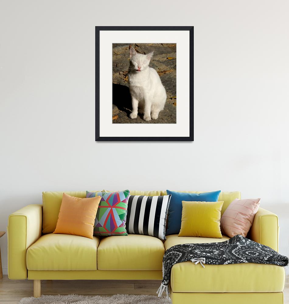 """""""White Cat""""  (2010) by lainiewrightson"""