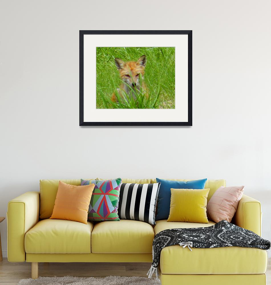 """""""Fox in the Grass""""  (2012) by Kimmary"""