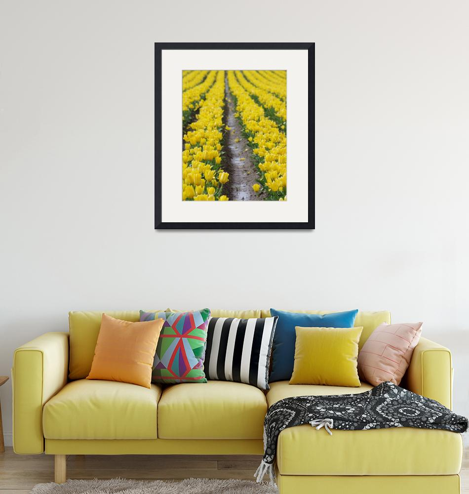 """""""Yellow Brick Road""""  (2011) by aRTPhotograph"""