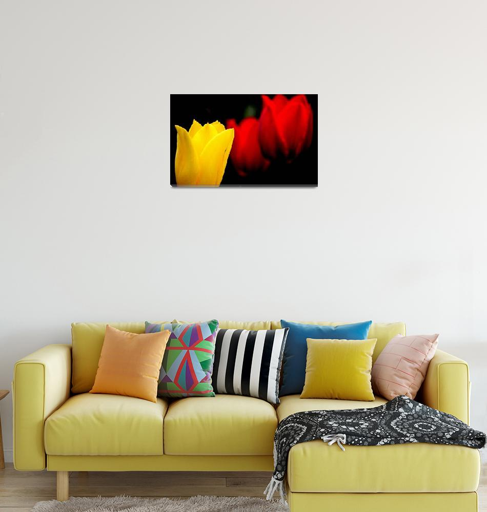 """""""Yellow and Red Tulips""""  (2014) by joanhan"""
