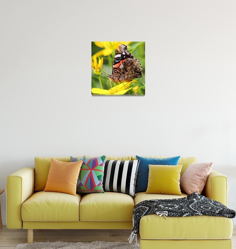 """""""Red Admiral Butterfly square""""  (2014) by KsWorldArt"""