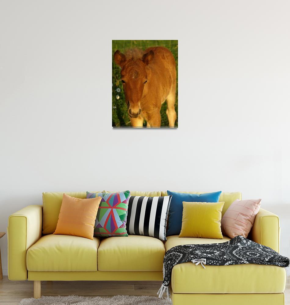 """Edda ~ Icelandic horse foal""  (2009) by inkandbrushcreations"