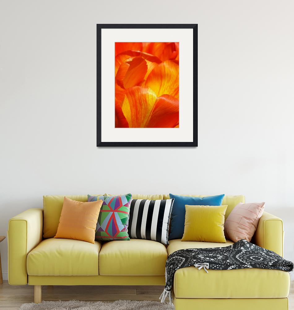 """""""Colorful Tulip""""  (2015) by vpicks"""
