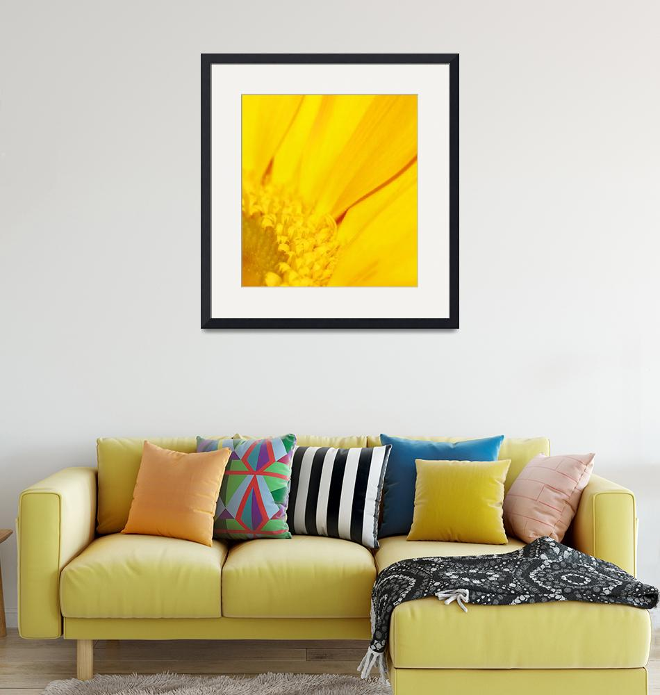 """Golden Gerbera""  (2009) by rayjacque"