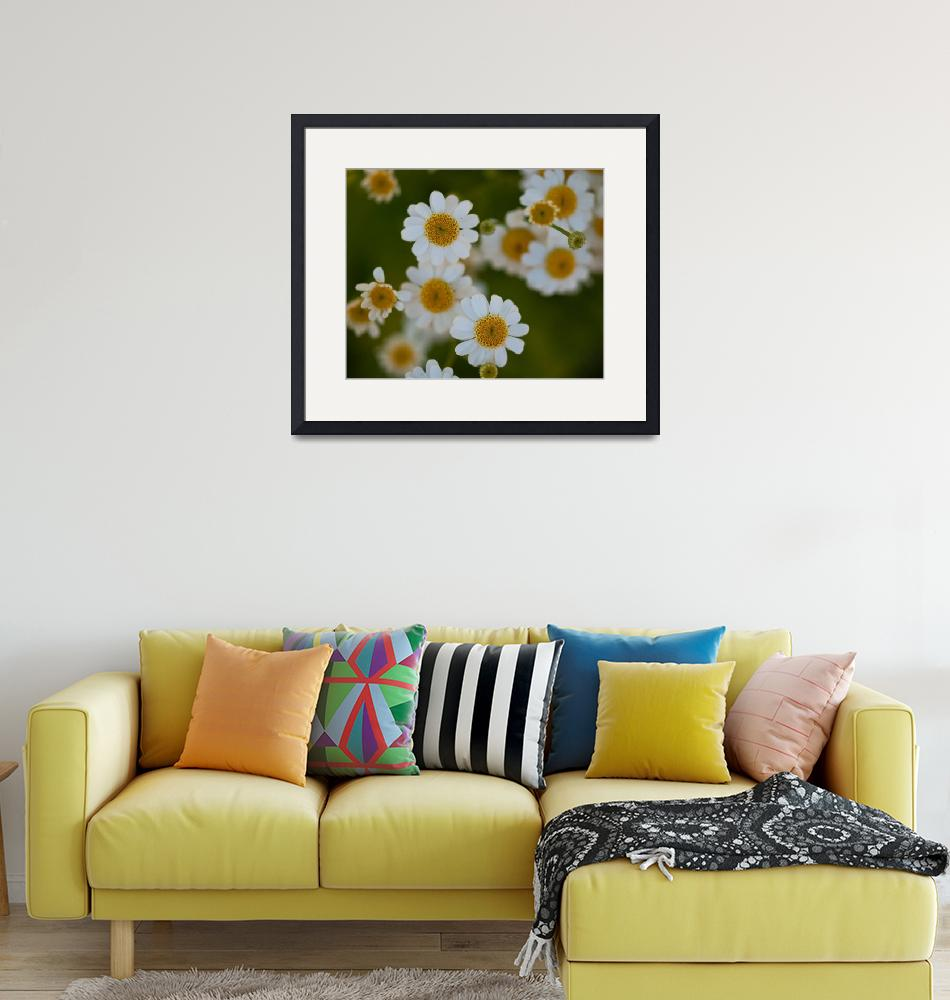 """""""DoF and Daisies""""  by MBandy"""