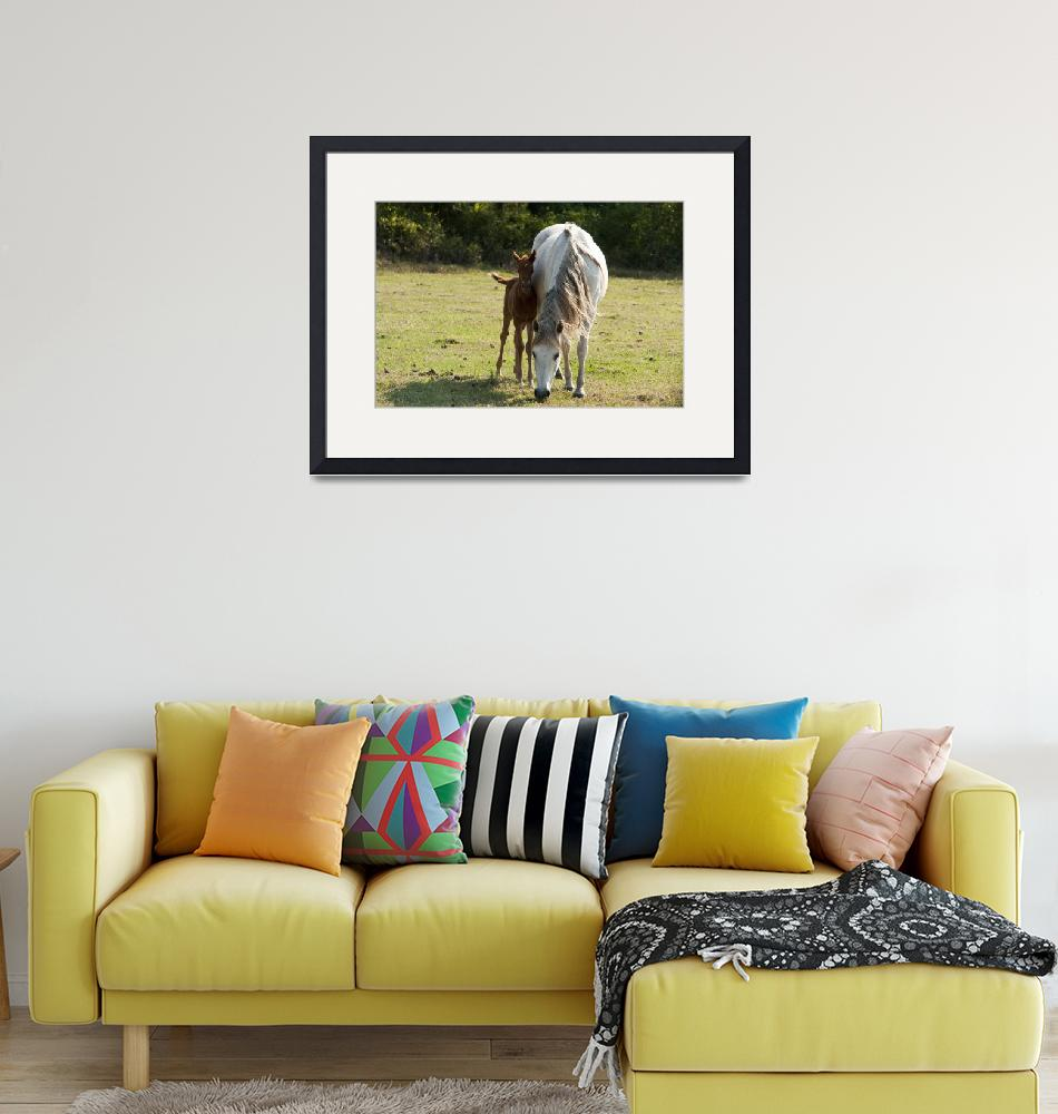 """""""Mother Watches Over Foal""""  (2010) by barbee"""