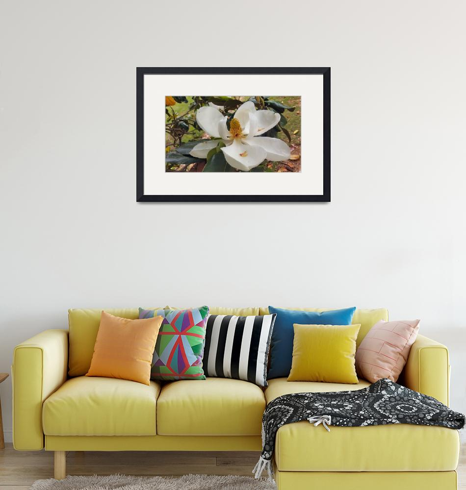 """magnolia flower picture art print""  (2018) by derekmccrea"