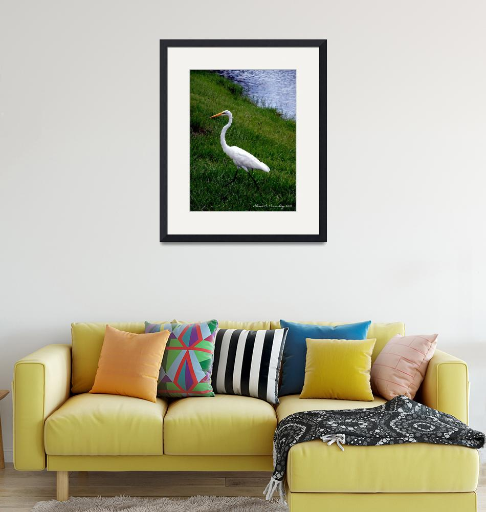 """""""Great Egret Promenade""""  (2009) by ChrisCrowley"""