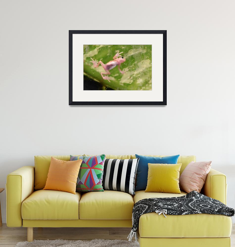 """""""Pink Frog""""  (2019) by JeanniesPhotography"""