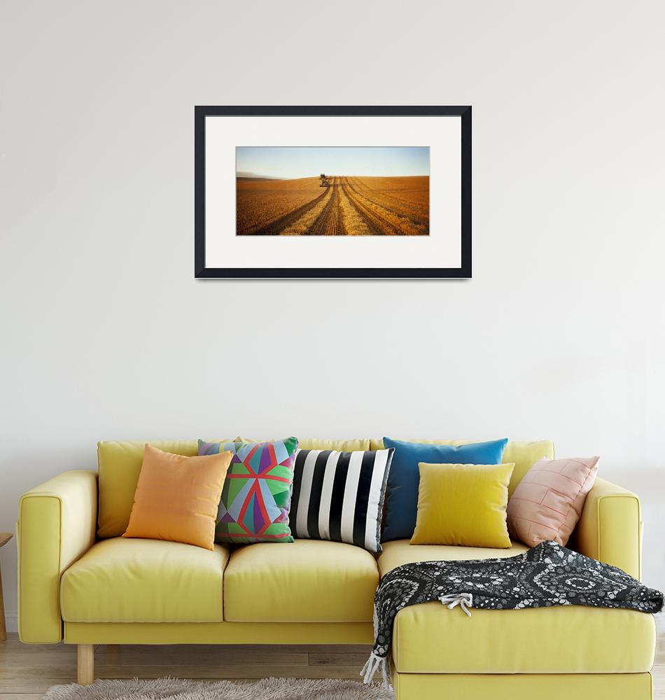 """""""Barley Harvest Temuka New Zealand""""  by Panoramic_Images"""