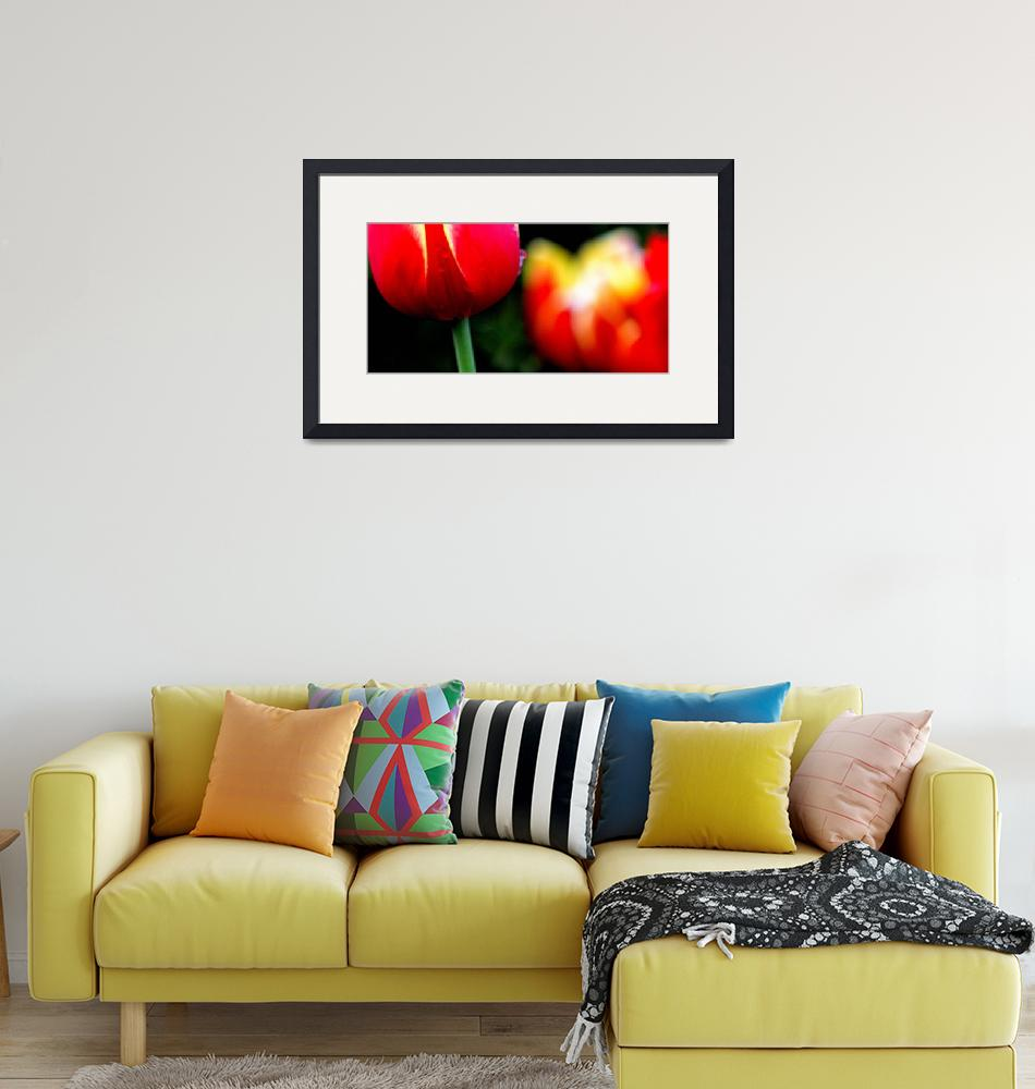 """Red Yellow Tulips""  (2014) by joanhan"