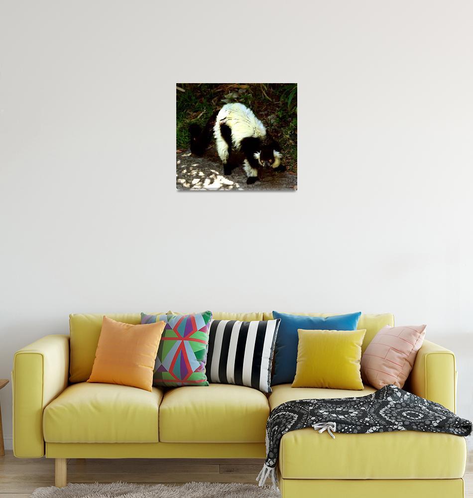 """Lemur - Black and White Ruffed""  (2009) by rayjacque"