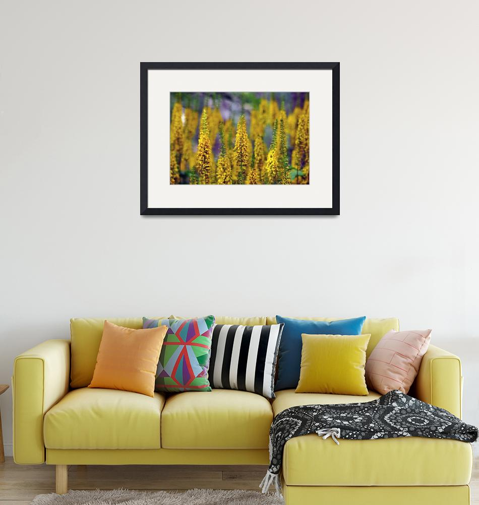 """""""A Field of Yellow Flowers"""" (2011) by LJdesigns"""