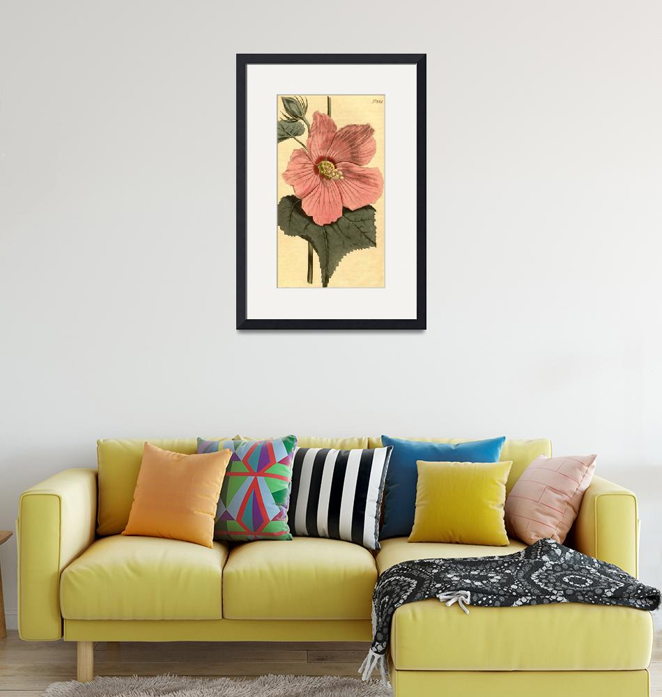 """Vintage Illustration of a Hibiscus Flower (1806)""  by Alleycatshirts"