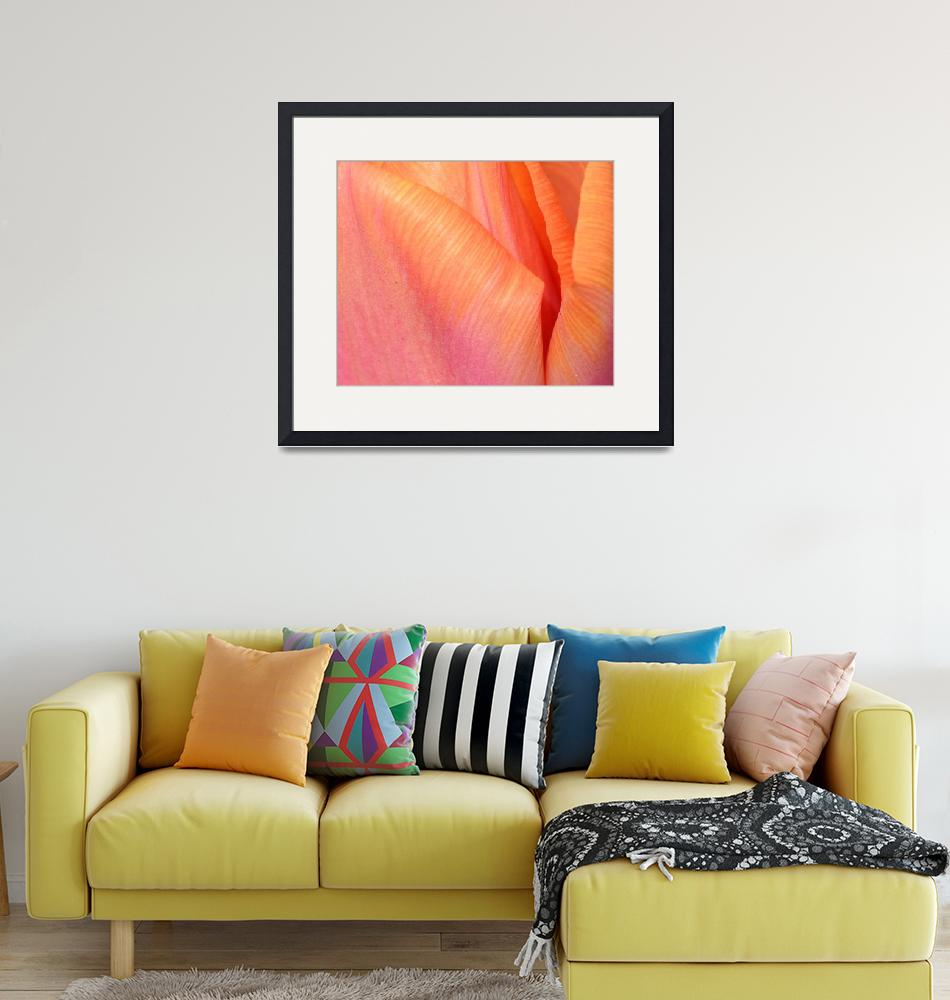 """""Pink Orange Tulip 10"" #10042315.0732 (3)""  (2015) by achimkrasenbrinkart"