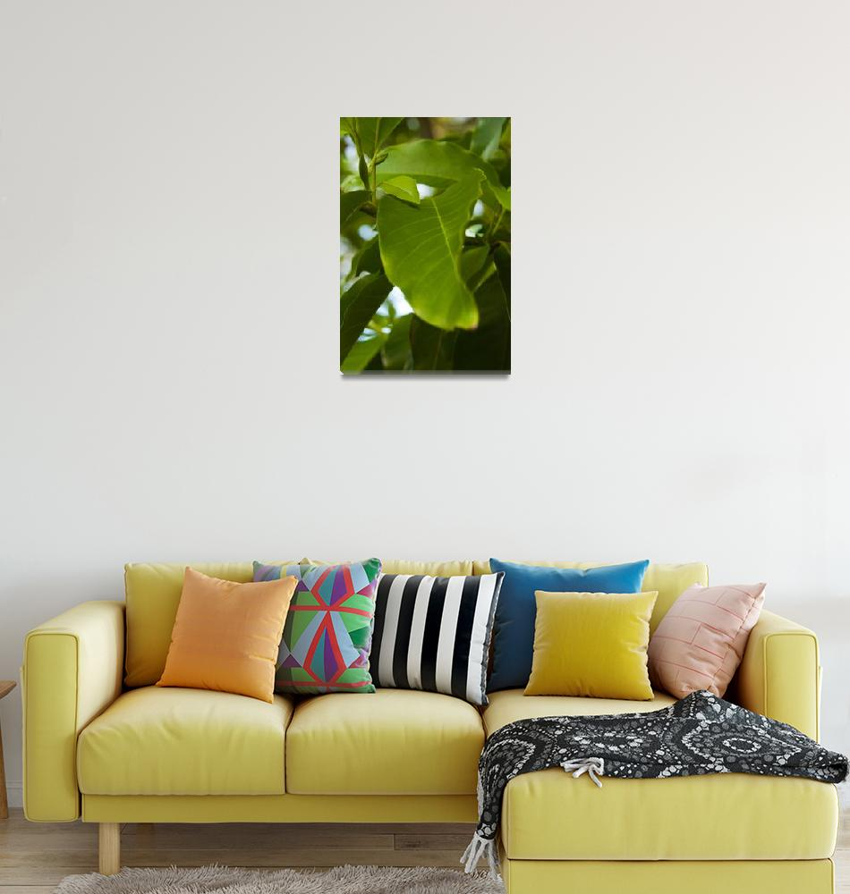 """""""Green leaves of Hawaii""""  (2008) by blisspixel"""