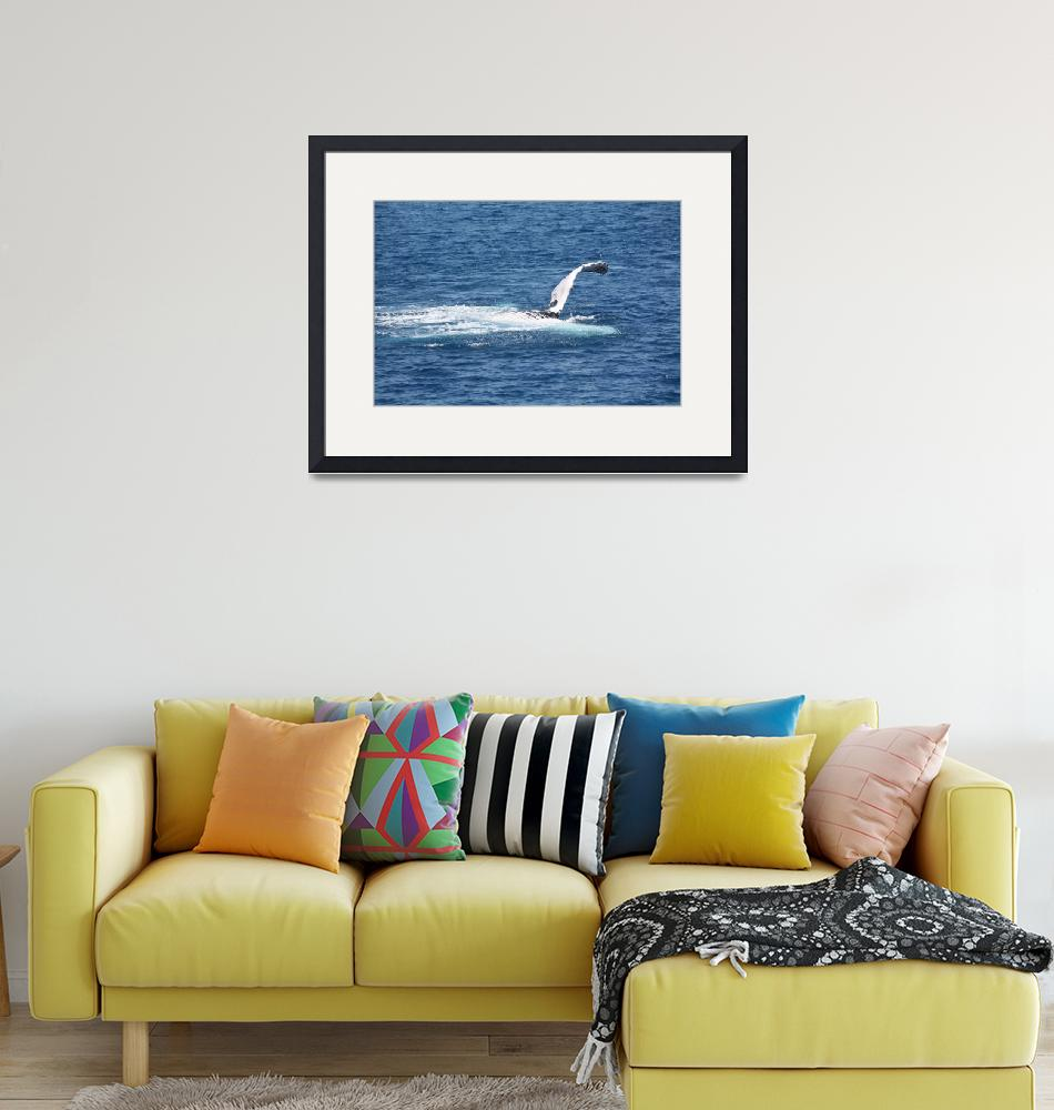 """NaP_ Whale Watching123""  by nevilleprosser"