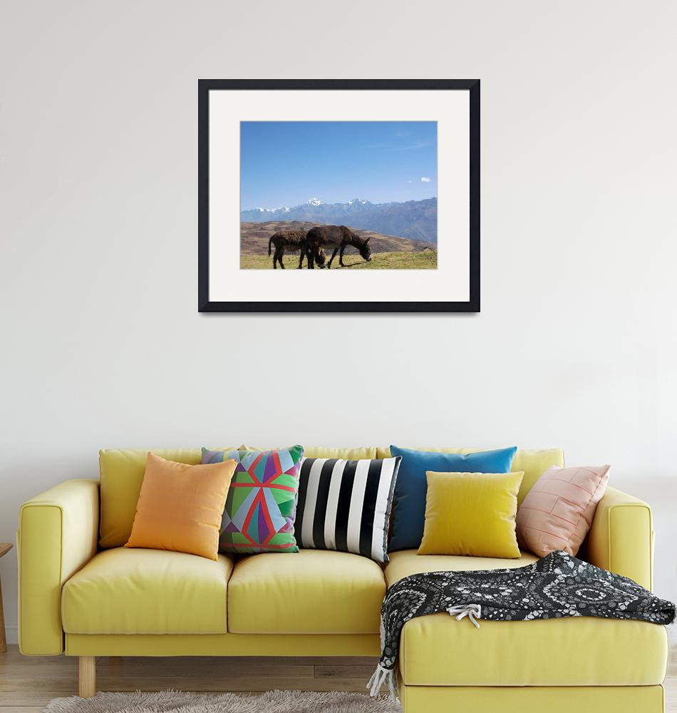 """""""Burros in Sacred Valley Peru""""  (2007) by burnsgolf"""
