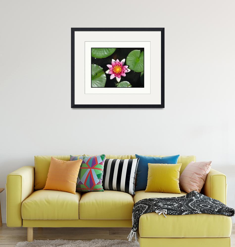 """""""Native Lily Flower Plant and Pads""""  (2009) by CuriousEye"""