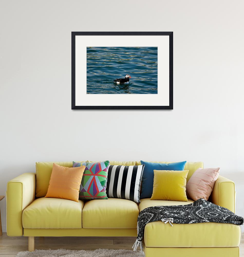 """""""Puffin Swimming in a FlatSea""""  (2004) by JoaoPonces"""