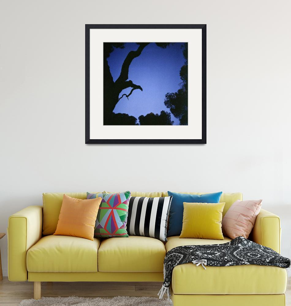 """""""Tree branches in silhouette against blue dusk sky""""  (2008) by edwardolive"""