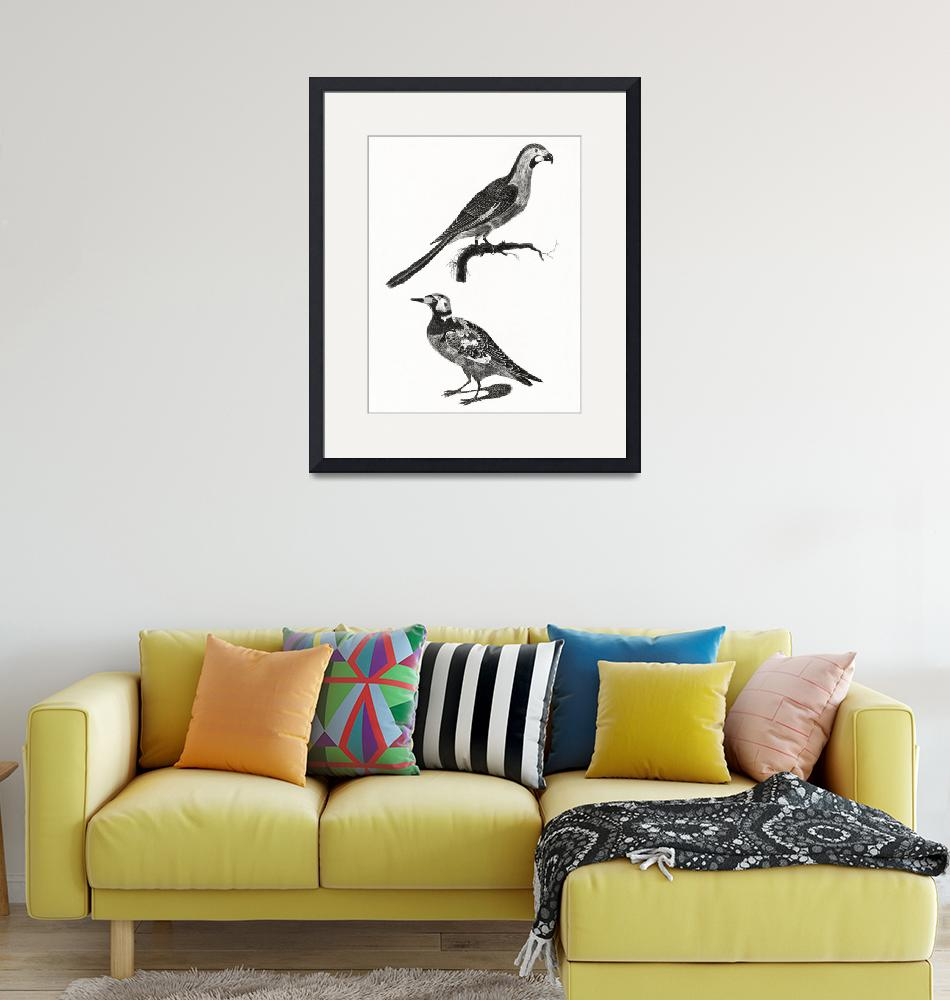 """""""A Parrot and a Ruddy Turnstone by Johan Teyler (16""""  by motionage"""