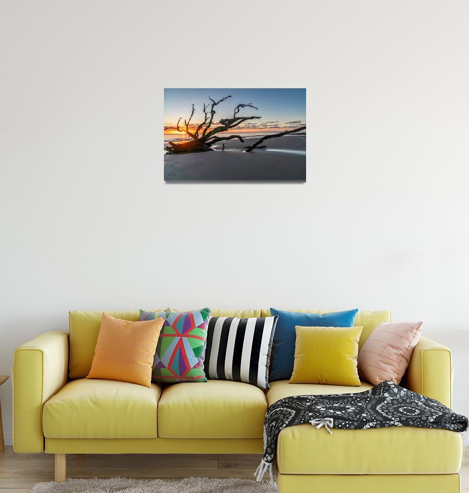 """Driftwood Beach Tree Sunrise""  (2019) by beecreekphotography"