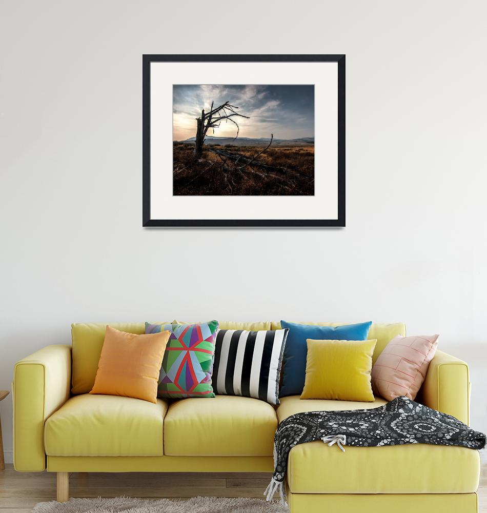 """""""Dead Tree in Yellowstone""""  by me9"""