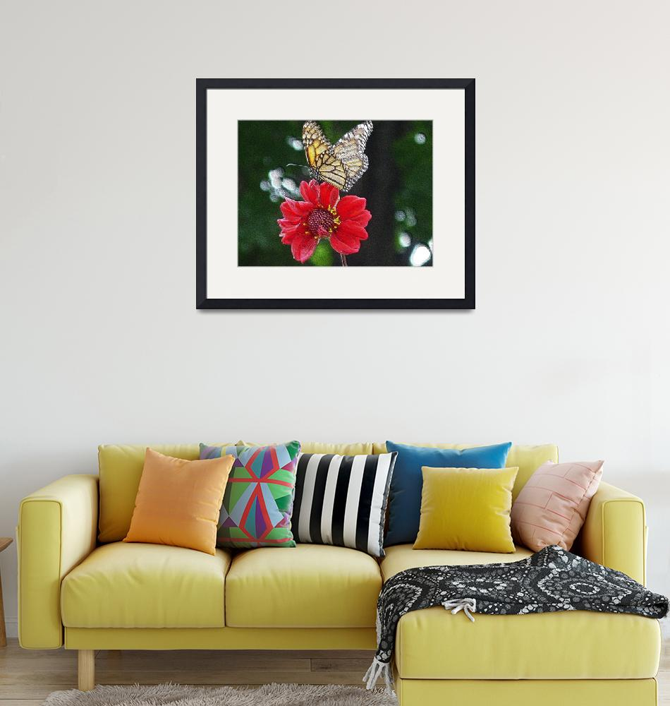 """""""paintedwood-600-butterfly-dsc04167""""  by loxly"""