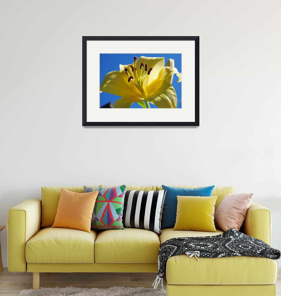 """""""Yellow Lily""""  (2013) by Willssb"""