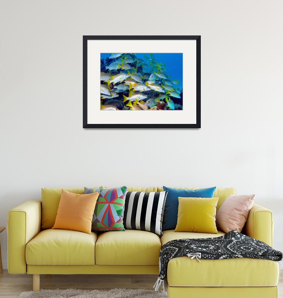 """""""Disorganised Fish""""  (2006) by JoaoPonces"""