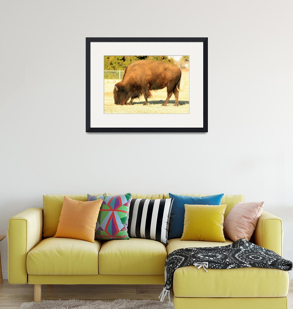 """American Bison""  (2009) by rayjacque"