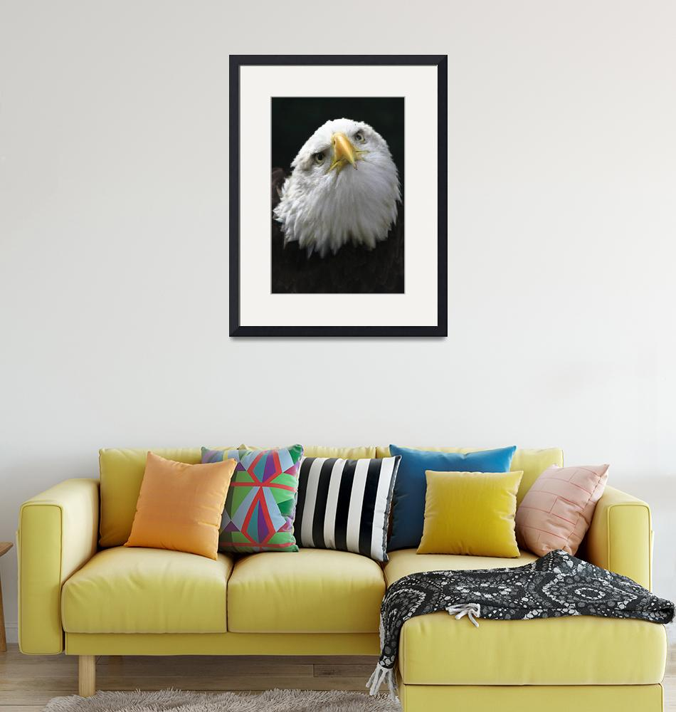 """""""Curious Eagle"""" (2010) by RichImages"""