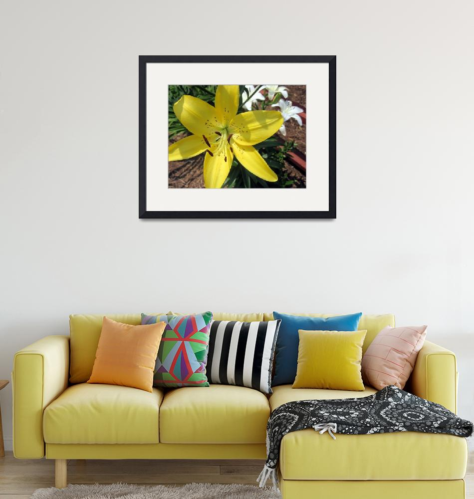 """Yellow and Whtie Lilies""  (2011) by johnscanvassprints"