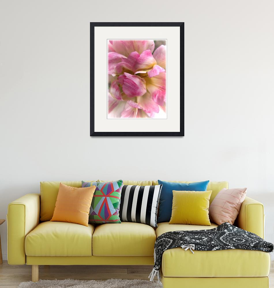 """""""Soft & Frilly Pink & White Tulip Petals in Bloom""""  by Chantal"""