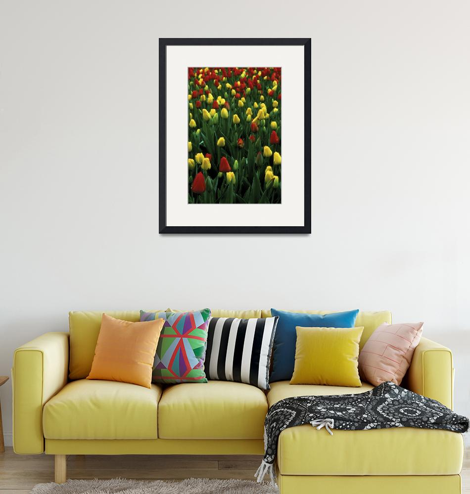 """""""Spring Tulips""""  (2004) by jimcrotty"""