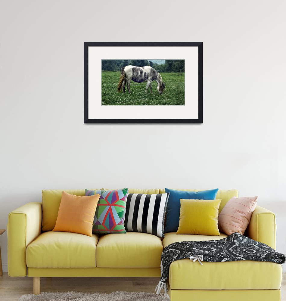 """""""Horse Grazing in a Field of Clover""""  (2005) by WilshireImages"""