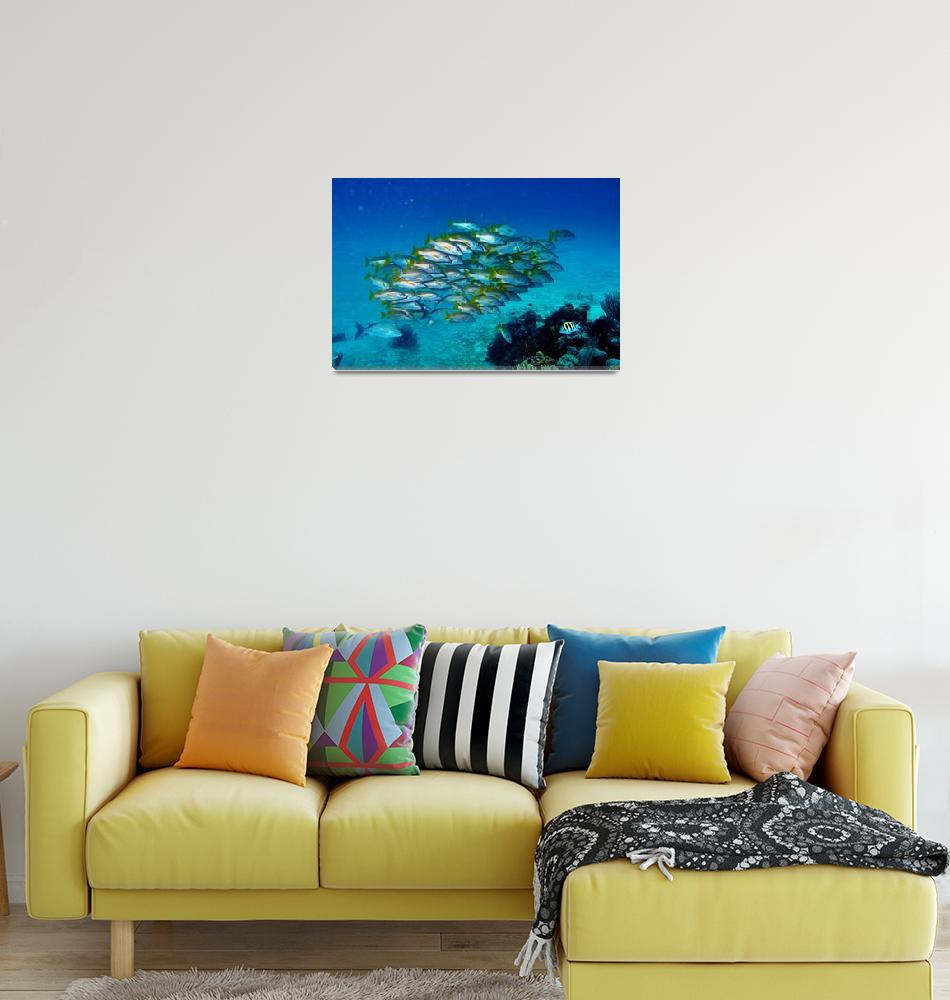 """""""Yellowtail Snapper Hovering Over Reef""""  (2006) by JoaoPonces"""
