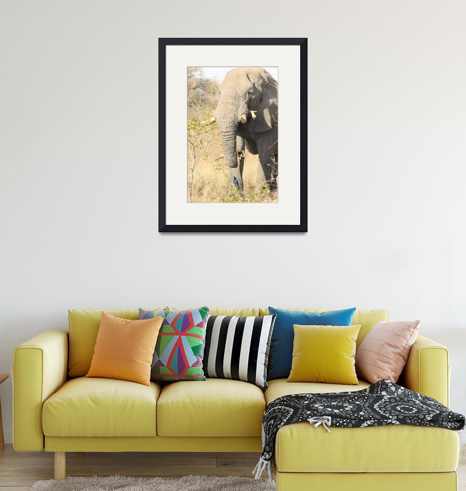 """""""The Elephant and the Starling  6648""""  (2013) by rayjacque"""