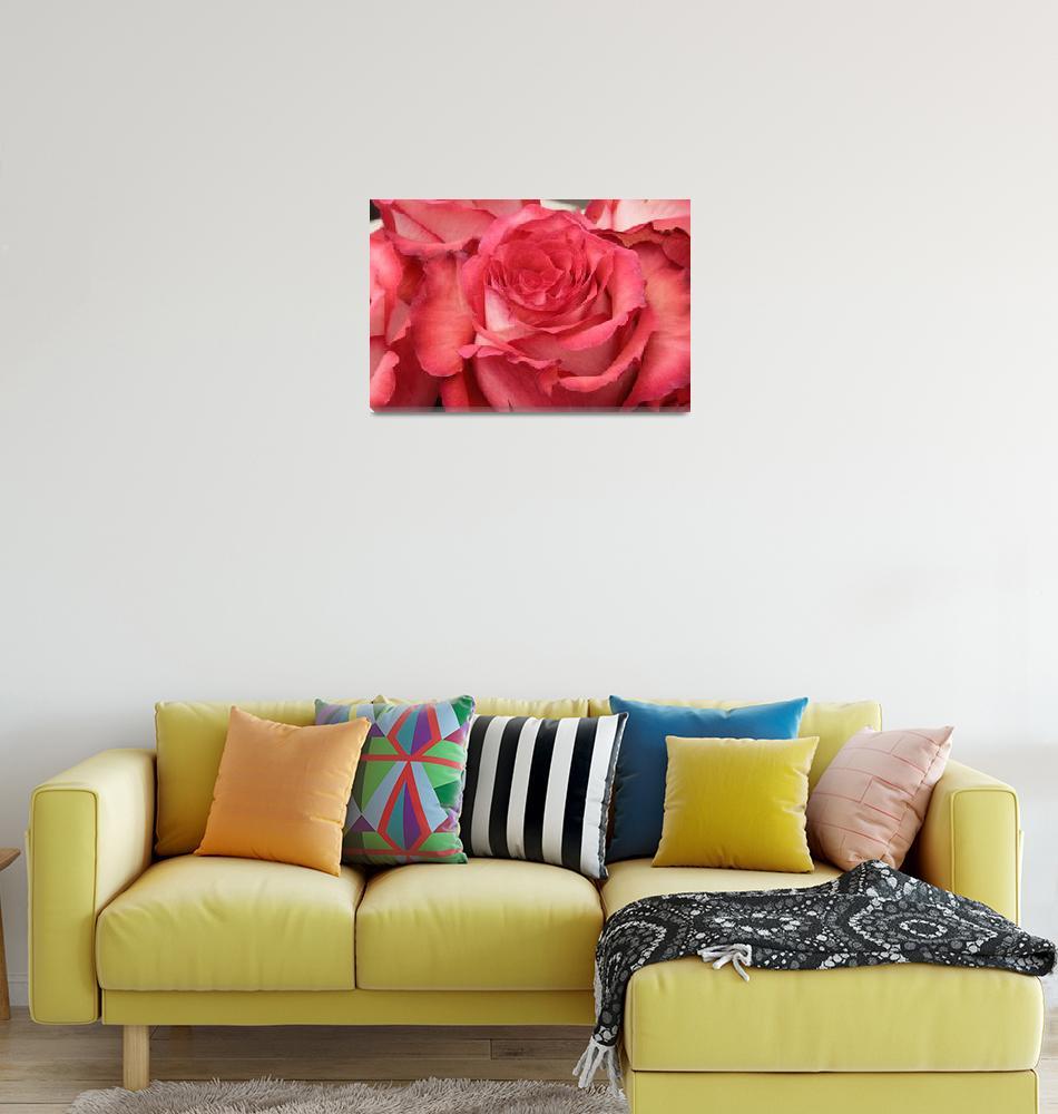 """""""Red Rose Flower""""  (2014) by rhamm"""