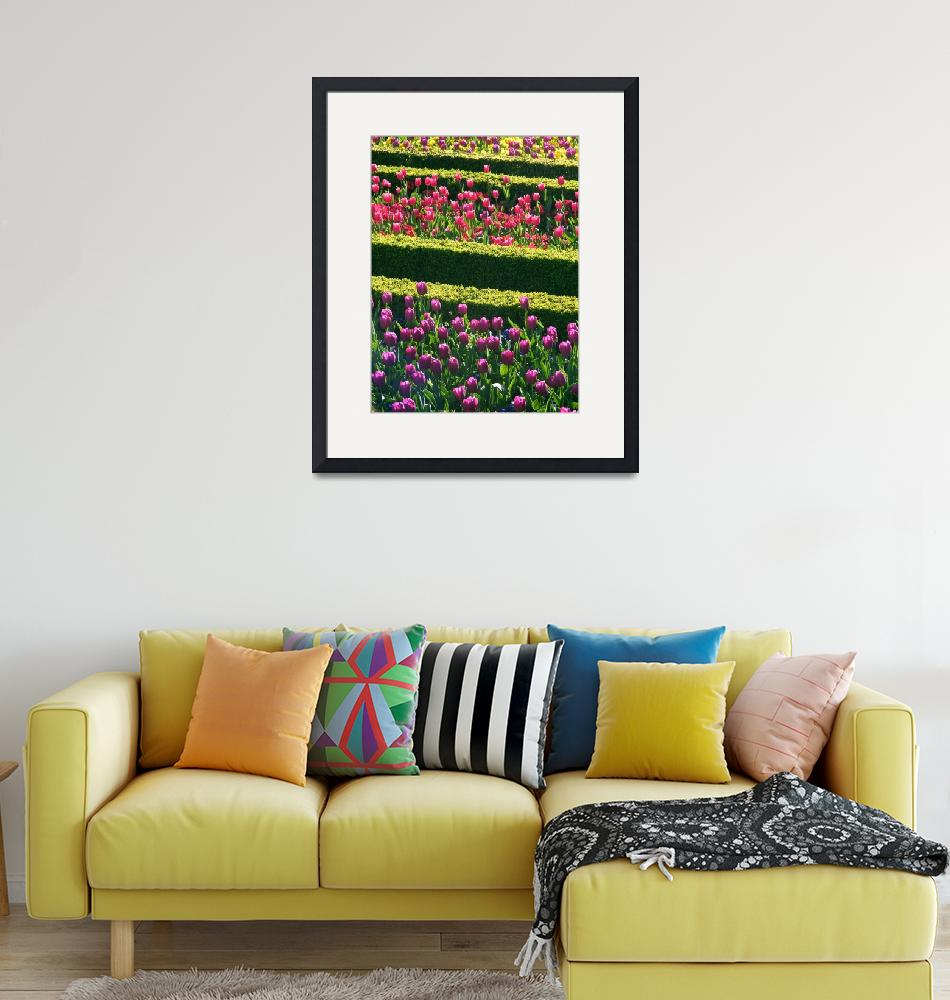"""""""Formal Flower Bed Rows""""  (2010) by fizzyimages"""